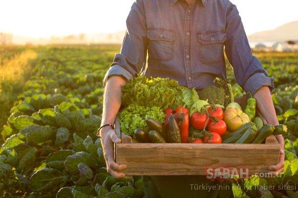 Bu besinler saç dökülmesini engelliyor!
