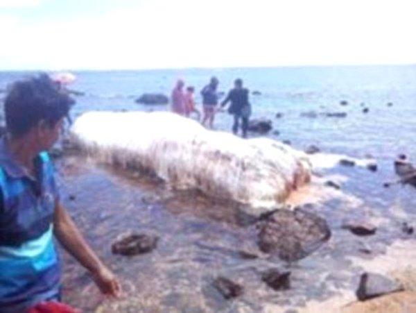 Kıyıya vuran 'beyaz tüylü dev yaratık' halkı şoke etti!
