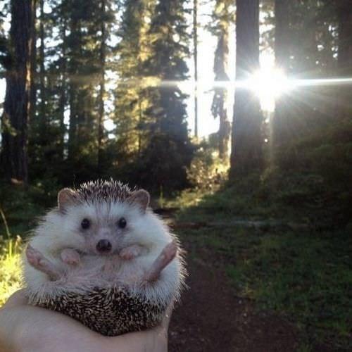 Instagram'ın en ünlü 10 hayvanı