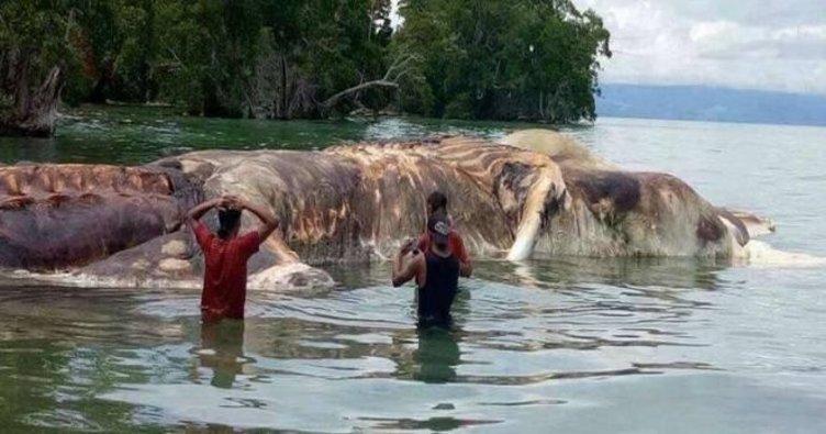 Endonezya'daki 'gizemli canavar' balina çıktı