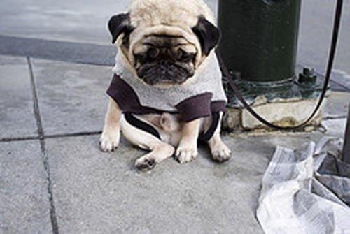 Dünyanın en üzgün köpeği