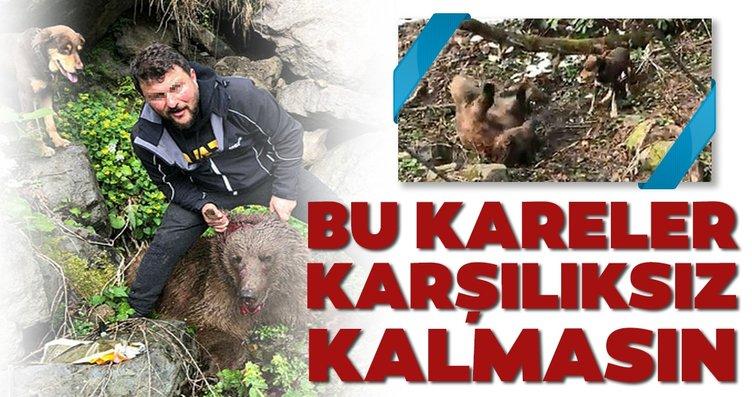 Vurulan yavru ayıya işkenceye suç duyurusu