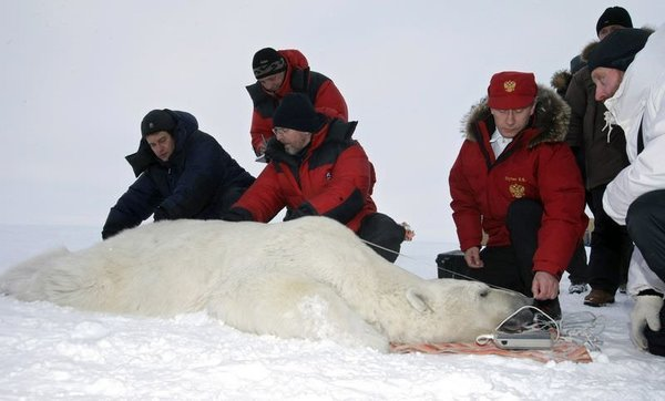 Putin ve kutup ayıları...