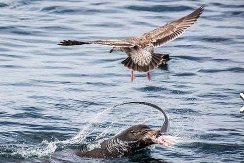 Hayvanların vahşi kavgaları