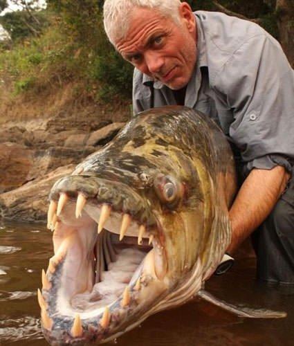 Köpekbalığı köpekbalığını yedi