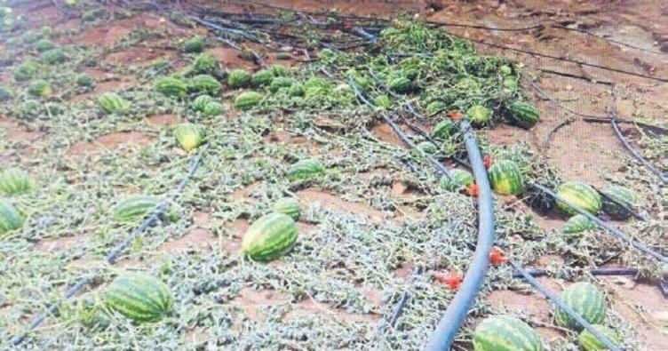 Bayındırlı çiftçiler dolu mağduru oldu