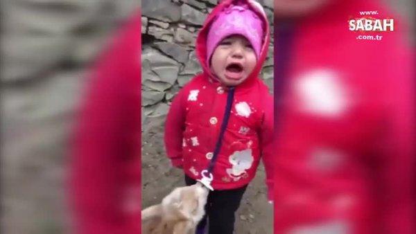 Sevimli bebeğin emziğine dadanan yavru keçiyle mücadelesi