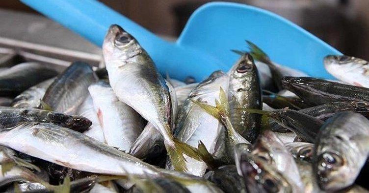 Bakan Pakdemirli duyurdu: Balıkçılık av sezonu, bu gece sona eriyor