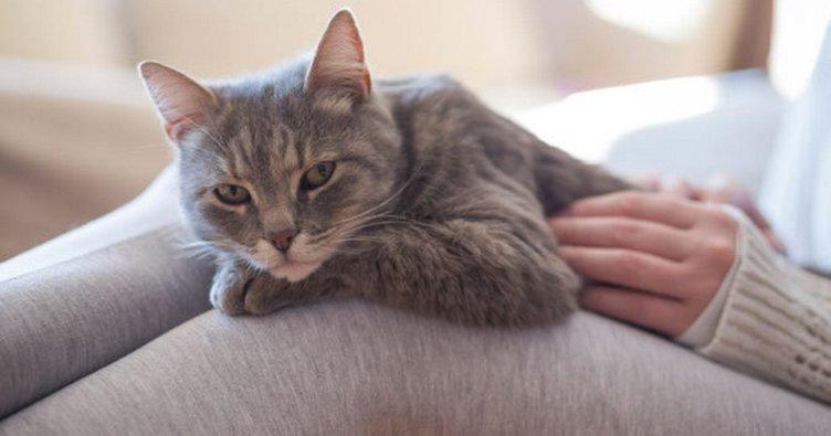RÜYADA KEDİ YAVRUSU GÖRMEK - Rüyada kedi yavrusu sevmek ne anlama gelir?