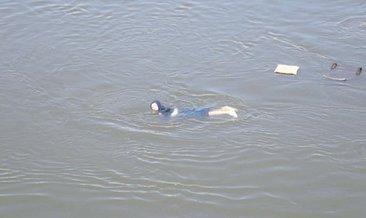 Fotoğraf çektirirken Meriç Nehri'ne düştü
