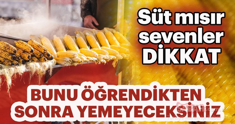 Süt mısır sevenler dikkat! Bunu öğrendikten sonra...