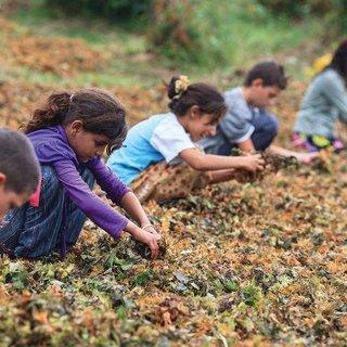 2018 yılı Çocuk işçiliği ile mücadele yılı ilan edildi