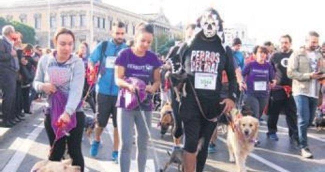 3 bin 500 köpek maraton koştu!