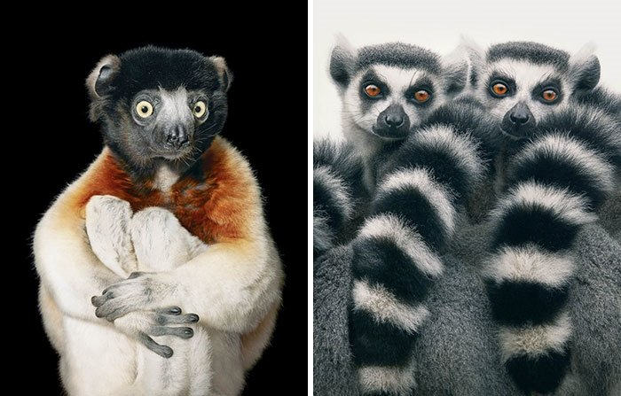 Nesli Tükenmekte Olan Canlıları Fotoğraflıyor Galeri Dünya 18