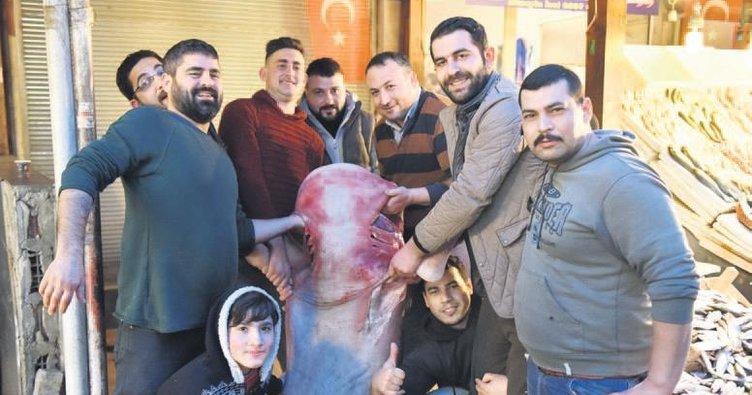 Akdeniz'de 5 metrelik köpek balığı yakalandı