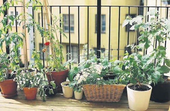 Balkon bahçeleriyle şehre baş kaldırın!