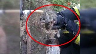 Muğla'da kafası demir boruya sıkışan yavru kediye ilginç operasyon   Video