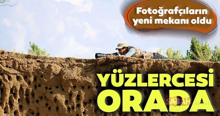 Van'da kırlangıçların yuva yaptığı tepe fotoğraf tutkunlarının mekanı oldu
