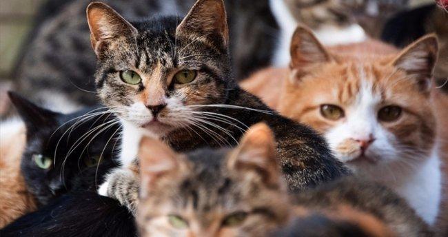 9 kediyi öldüren adama 36 ay hapis cezası