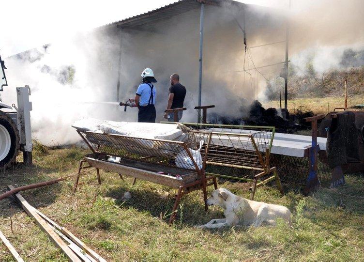 6 yavrusu yangında telef olan köpek, olay yerinden ayrılmadı