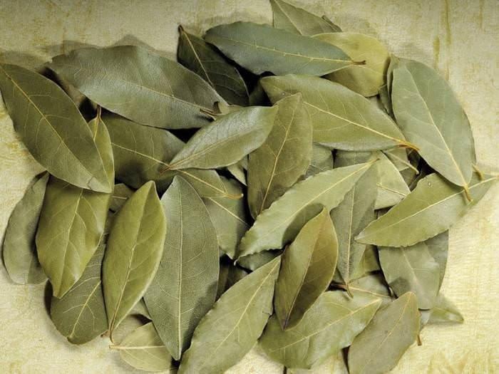 Defne yaprağının faydaları