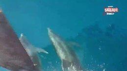 Antalya'da teknelerle kıyasıya yarışan yunus balıkları kamerada | Video