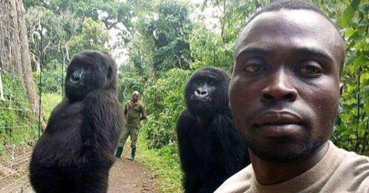 Gorillerle selfie tartışması
