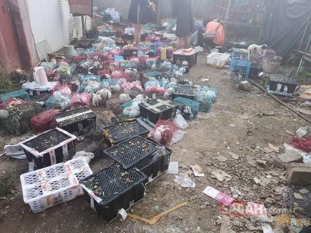 Çin'de binlerce canlı evcil hayvan vahşice öldürüldü