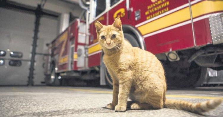 İtfaiyenin kadrolu kedisi Boncuk