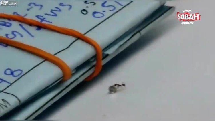 Dünyanın en küçük elmas hırsızı kameralara yakalandı!