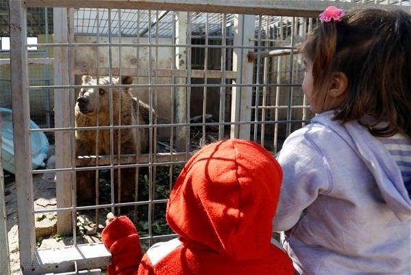 Musul hayvanat bahçesi bu hale geldi!