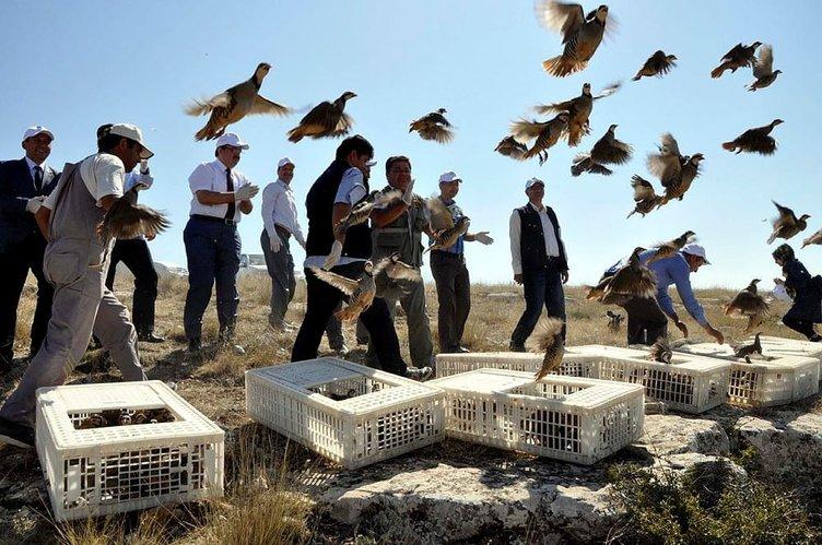 Biyolojik savaşçılar Türkiye semalarında