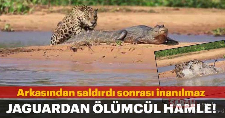 Vahşi doğa!