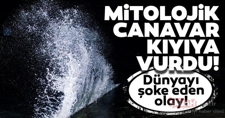 210 yıllık mitolojik canavar kıyıya vurdu! Dünyayı şoke eden olay