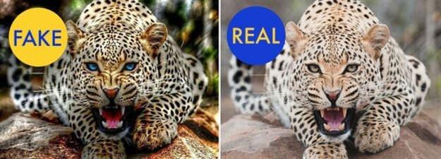 Hangisi gerçek, hangisi yalan?