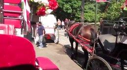 Manhattan Central Park'taki atlı faytonlar New York'un en önemli simgelerden biri olarak göreve devam ediyor