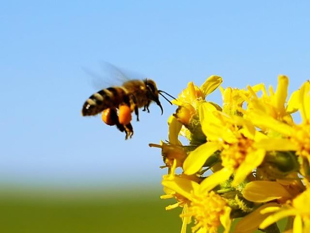 Türkiye için tehlikeli arıları yurda sokmaya çalışırken yakalandılar