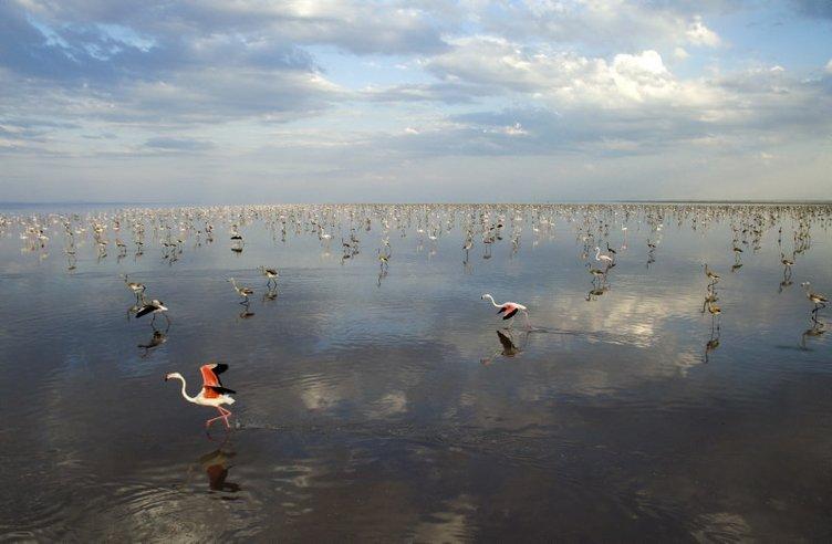 Tuz Gölü'nde görsel şölen