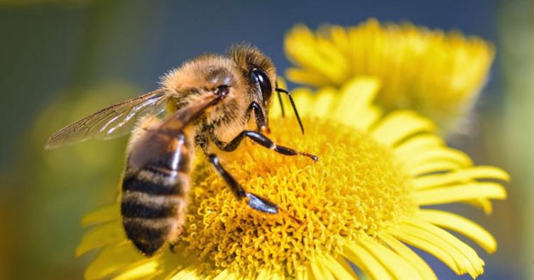 Sokmayan arılarla yurt dışına açıldı