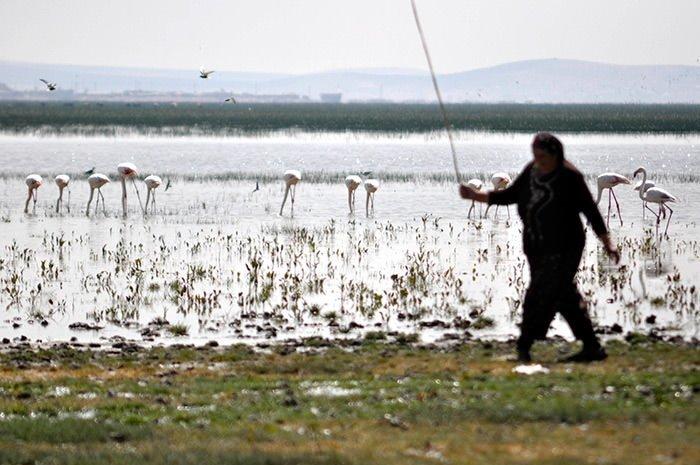 Pelikan ve flamingolar ziyaretçilerini bekliyor