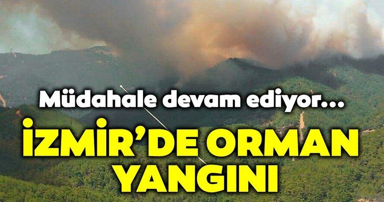 Son dakika: İzmir Karabağlar'da orman yangını çıktı! Yangını söndürme çabaları devam ediyor