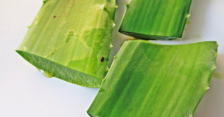 Aloe vera nasıl kullanılır? Aloe vera jel yüze nasıl uygulanır?