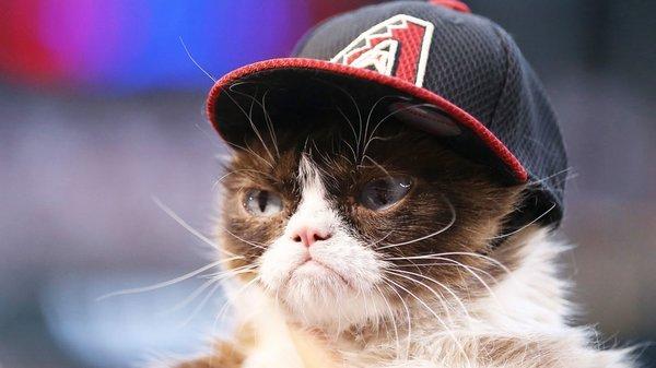Huysuz Kedi sahibine internetten 188 milyon TL kazandırdı!