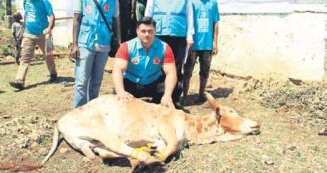 Kayaalp Zanzibar'da kurban eti dağıttı