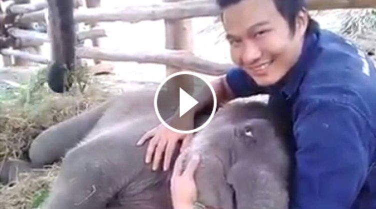 Dünyanın en tatlı fil yavrusu!