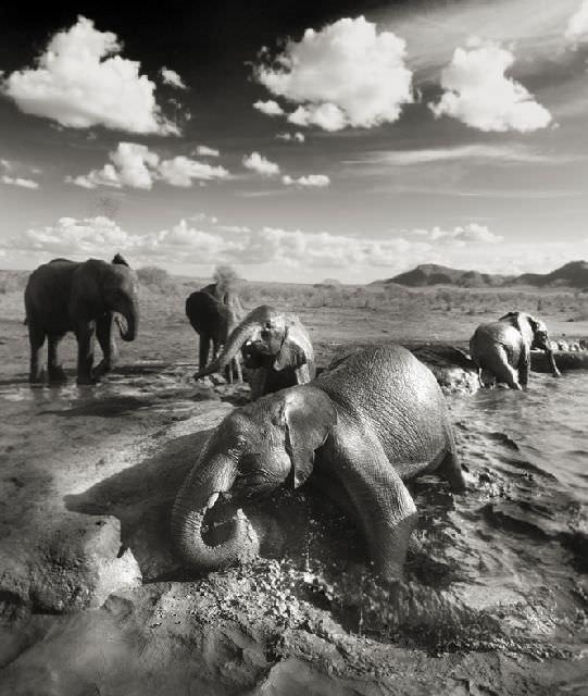 Joachim Schmeisser'in en güzel fotoğrafları
