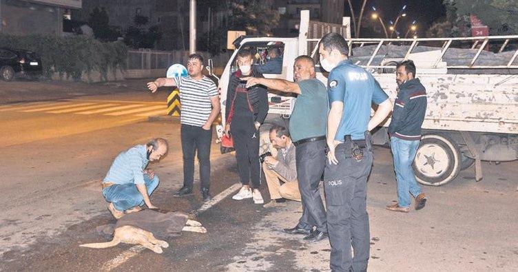 Otomobilin çarptığı köpek için vatandaşlar seferber oldu