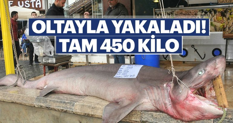 Oltasına 450 kiloluk köpekbalığı takıldı