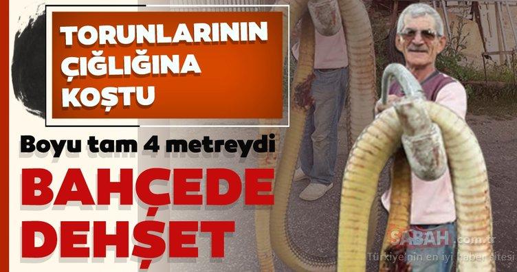 Sinop'ta dehşet: Dev yılan torunlarına saldırınca ne yapacağını şaşırdı