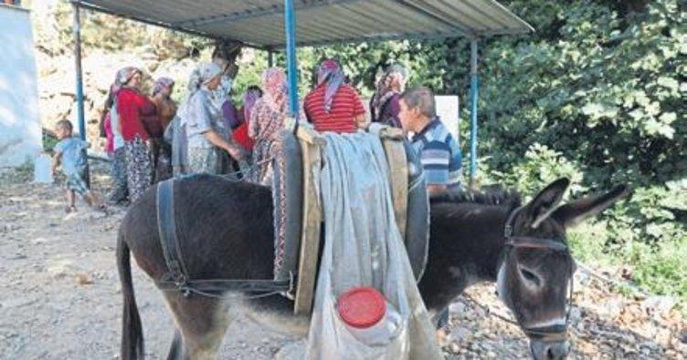 İzmir'de eşekle su taşıyorlar
